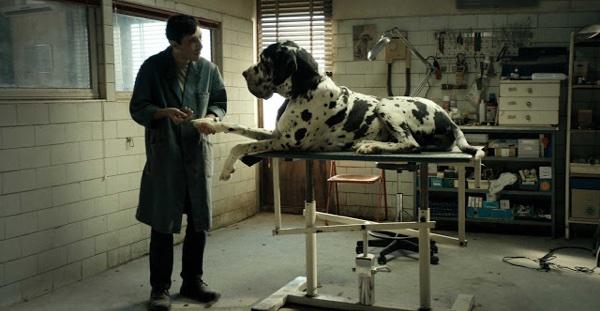 Dogman – El peor amigo del hombre